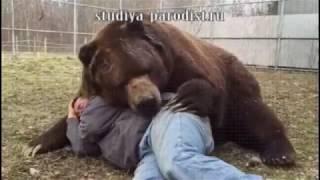 Мужик и медведь (прикольная озвучка)