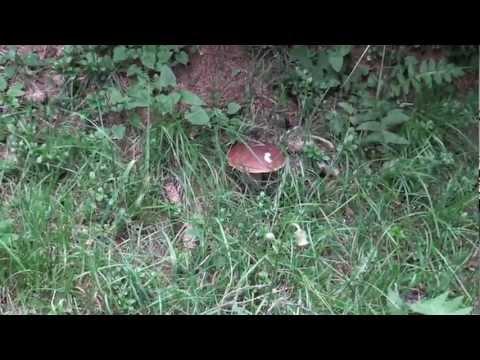 Mezzi contro un fungo a gravidanza