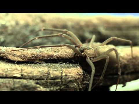 Remedii naturiste contra parazitilor