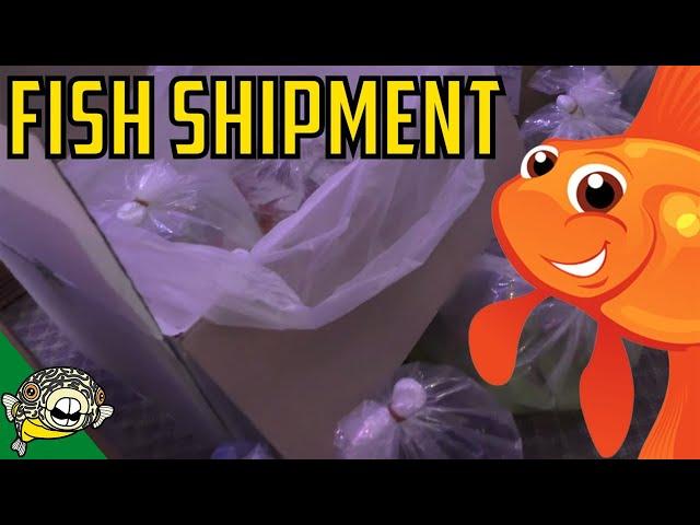 Fish Shipment, Betta Fish Shipment, Importing Fish, Fish Unboxing.