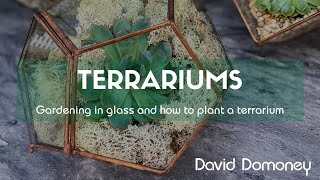 How A To Create The Perfect Indoor Glass Garden In Your Home. (Terrariums)