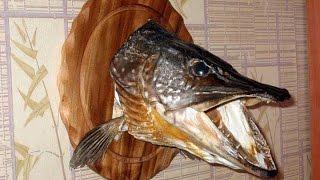 Изготовление чучел из головы рыбы