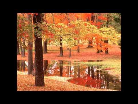 Сибирские грибы - Растревожила осень