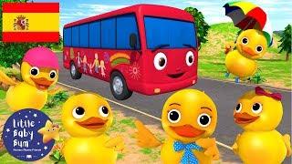Canciones Infantiles | ¡Cinco Patitos En Un Autobús! | Dibujos Animados | Little Baby Bum En Español