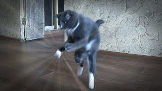 Смотреть кота, убойные приколы