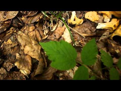 Candide di una targa da un fungo di unghie