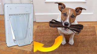Electronic Dog Door