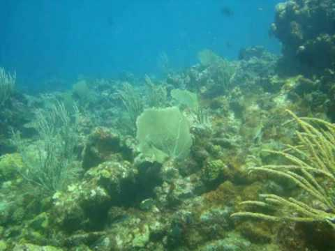 Coral Gardens, Antigua,Antigua und Barbuda