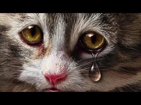 Бедные бездомные коты