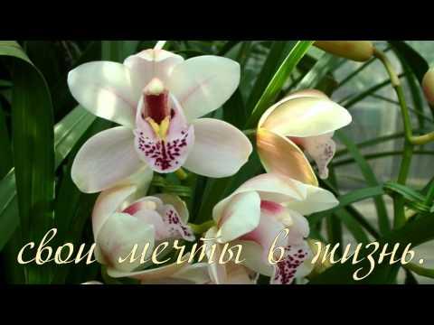 Видео про счастье смотреть