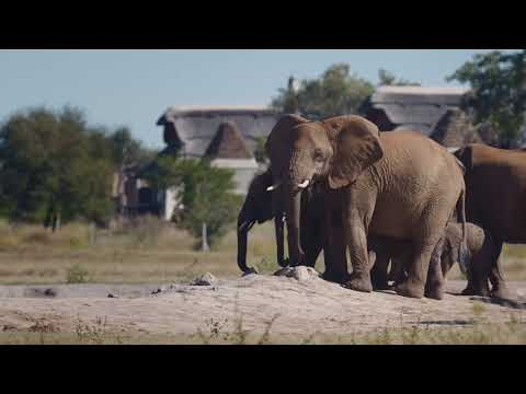 We are proud and delighted to showcase our latest video featuring remarkable moments and memories captured on Safari at Jamala Madikwe. We look forward to welcoming old and new friends to enjoy the lodge, our exceptional cuisine, charming staff and the abundant wildlife on our doorstep.