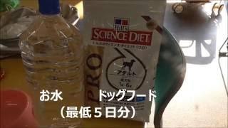 ペットの災害対策愛犬の非常用持出袋犬のしつけ方@横浜