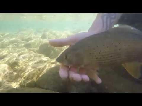 La pesca trascinata per comprare