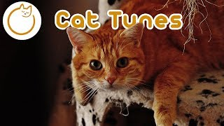 EXTENDED Cat Music - 15 Hours of the Ultimate Cat Music