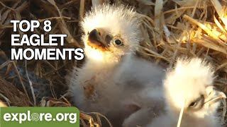 Who's Ready for Bald Eaglets to Hatch?!