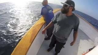 1 of 3 Yellowfin Tuna (Liberty Sportfishing out of Fisherman's Landing in San Diego)