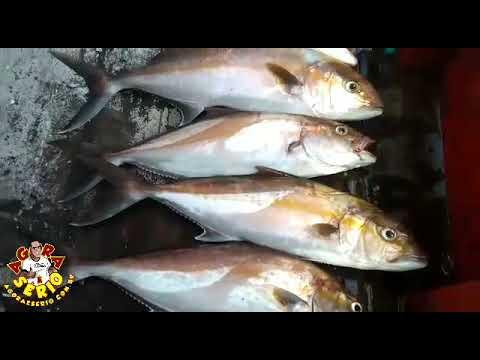 Pescadores de Juquitiba filho de peixe peixinho é