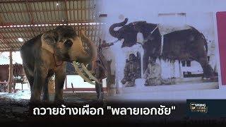 เตรียมน้อมเกล้าฯถวายช้างเผือก พลายเอกชัย แด่ในหลวง ร.10 | Springnews