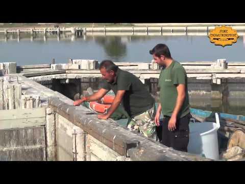 La pesca su una preparazione crucian di esche