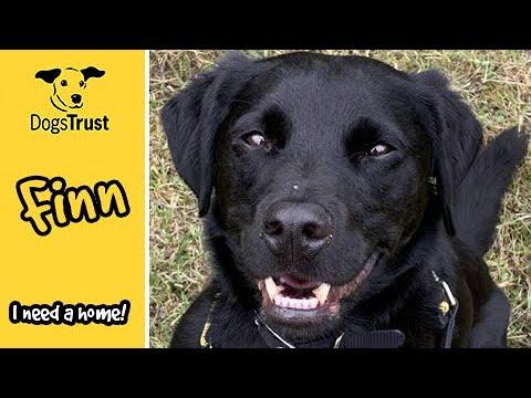 Meet Finn! | Dogs Trust Harefield