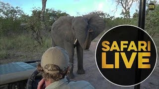 safariLIVES: Episode 5   Kholo.pk