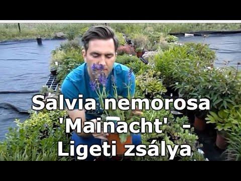 Seres Zita (zita) - Profile | Pinterest