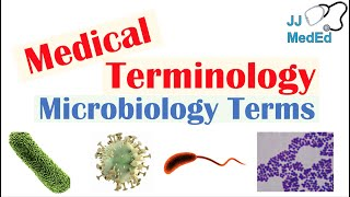 Medical Terminology - The Basics - Microbiology And Infectious Diseases