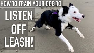 How To Practice ANY DOG To Hear OFF LEASH!