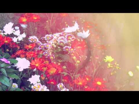 Lauren Aquilina- King Lyrics