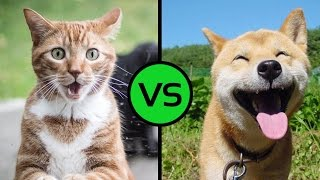 приколы 2016 коты vs собаки #8