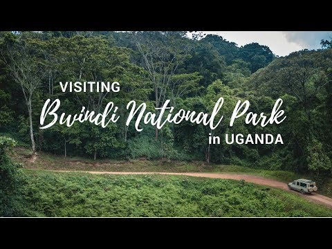 Exploring Bwindi Impenetrable National Park | Gorilla Safari Lodge | Uganda