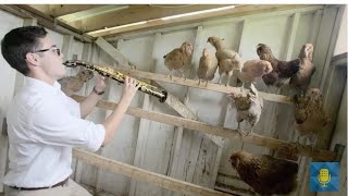 Teen Saxophonist performs Ku Ku with Chickens!   From the Top