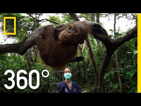 Orangutan School 360°