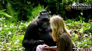 #58 - CURIOSITA'...Damian Aspinall's wife Victoria is accepted by wild gorillas!