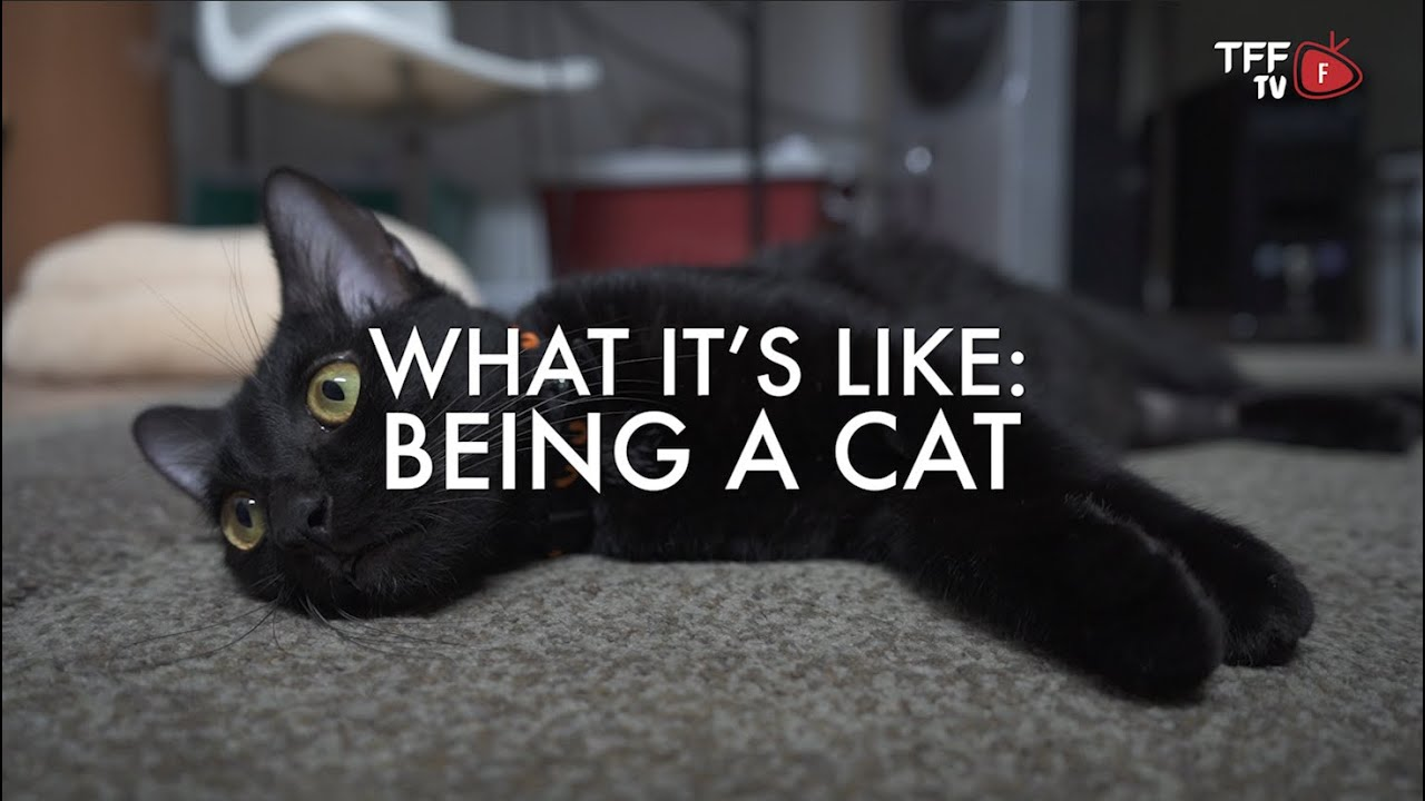 What It's Like: Being a Cat