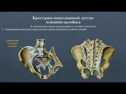 Анатомия крестцово-подвздошного сустава: строение, классификация, фиксирующий аппарат, движения