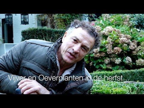 Wat doe je met je vijver in de herfst, de oeverplanten. Wat doe je met vijverplanten in het najaar?