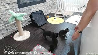 Kittens prepare for transport in an orderly fashion
