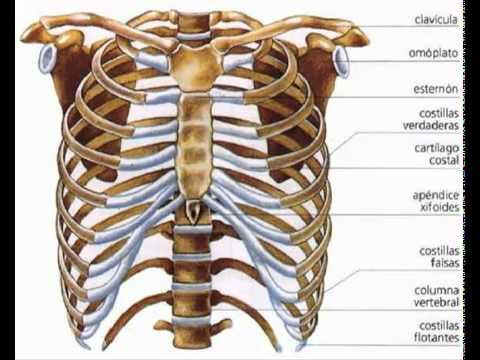 Dolor en el hombro tratamiento conjunto de remedios populares