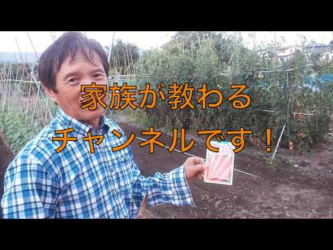 【にんじん】【種まき】ホームセンターのプロからにんじん栽培を教わる その1