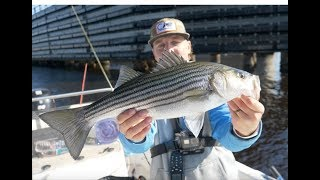 STRIPER FISHING in the WINTER!! Bridge Fishing and Fly Fishing