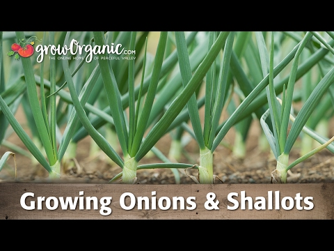 , title : 'Growing Organic Onions, Leeks, and Shallots