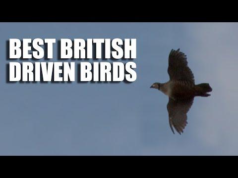 Best British Driven Bird Shooting