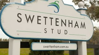 Bred To Win visits Swettenham Stud