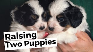 Raising Two Puppies: Twice the Fun or Double the Trouble?   Sarah Says Pets