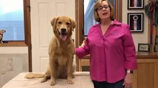 Canadian Kennel Club Breeder Seminars