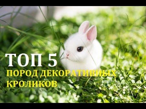 Курс лечения для диабетиков в больнице г.харьков