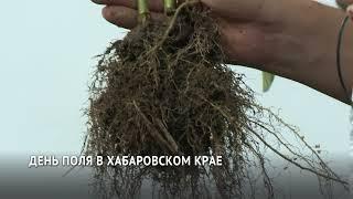День поля отметили в Дальневосточном НИИ сельского хозяйства