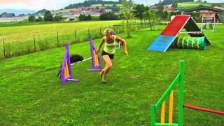 Obstáculos da competição agility