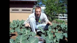 Broccoli - Spring or Fall Planting?